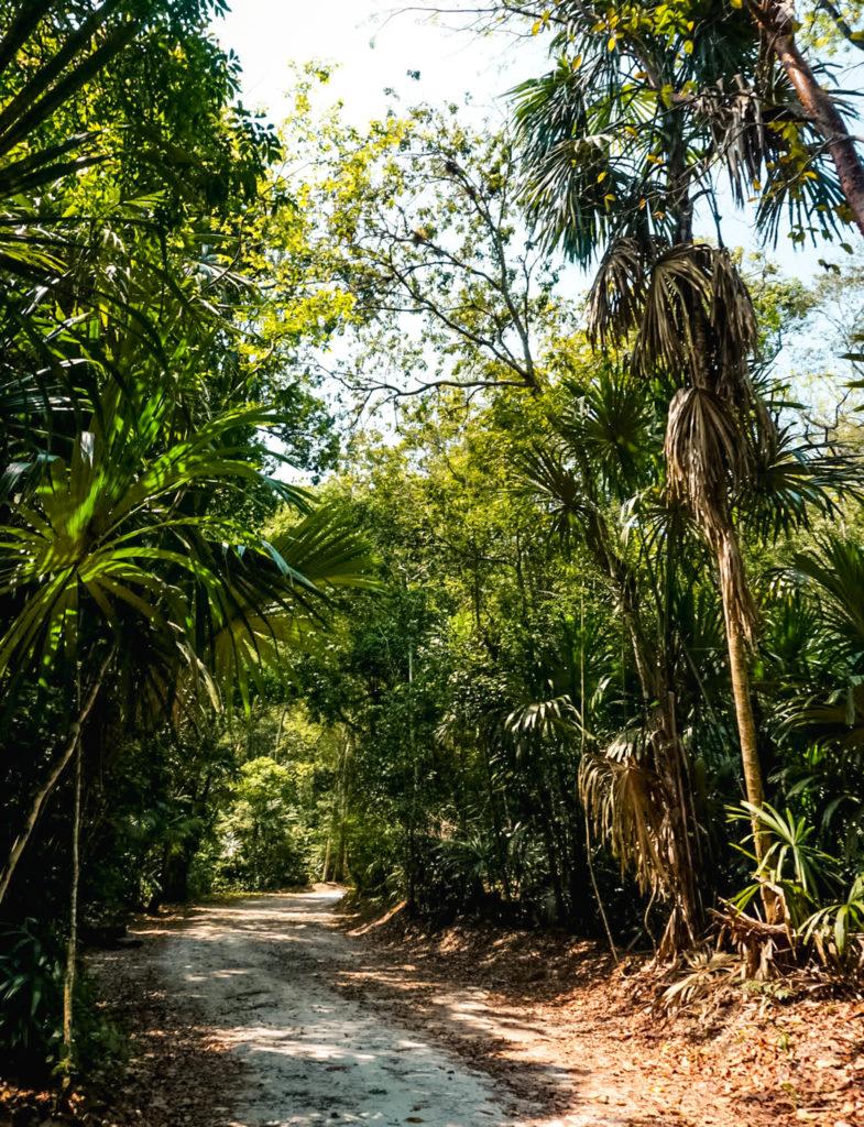 Tikal jungle